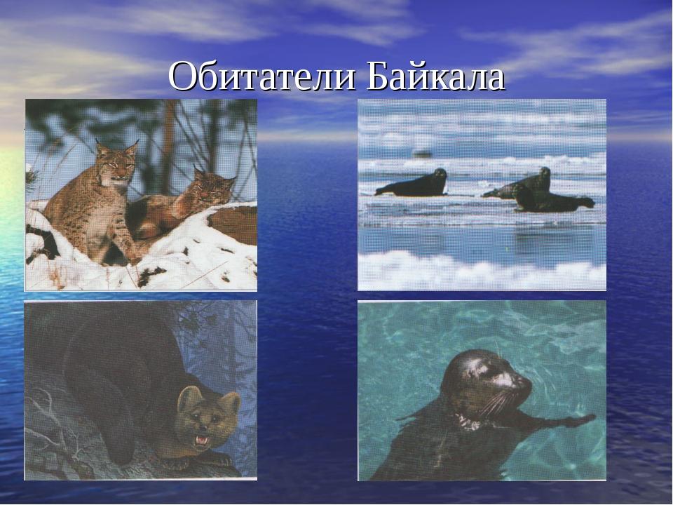 Обитатели Байкала