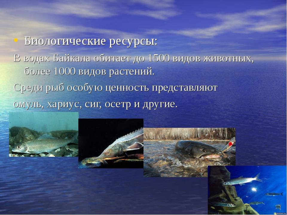 Биологические ресурсы: В водах Байкала обитает до 1500 видов животных, более...