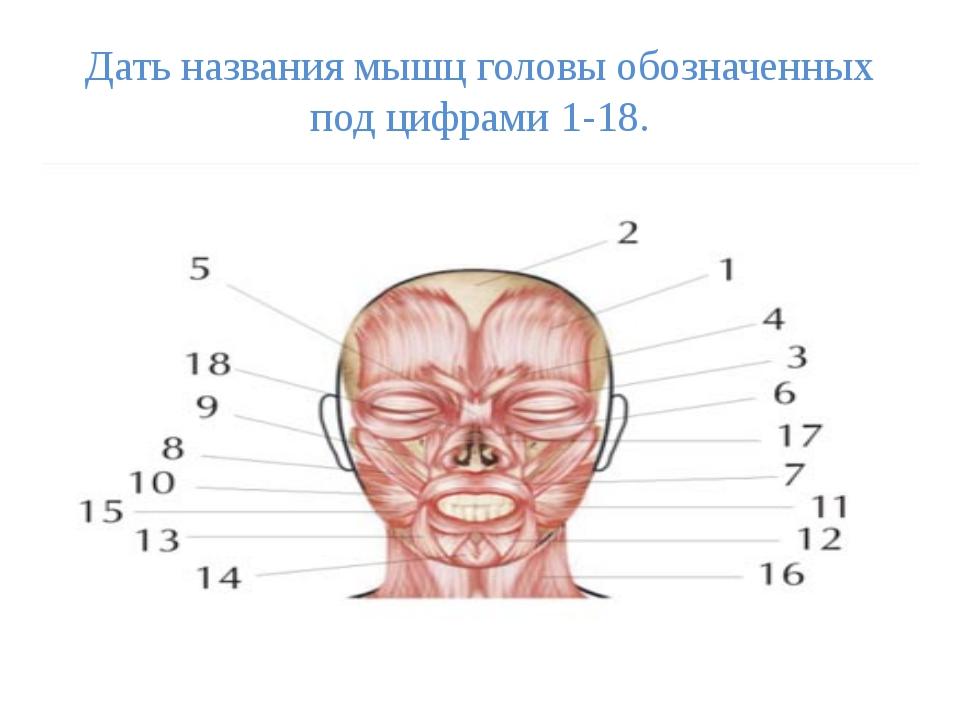 Дать названия мышц головы обозначенных под цифрами 1-18.