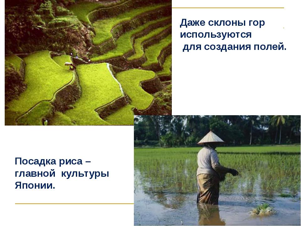 Даже склоны гор используются для создания полей. Посадка риса – главной культ...