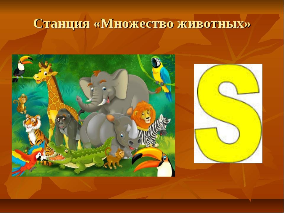 Станция «Множество животных»