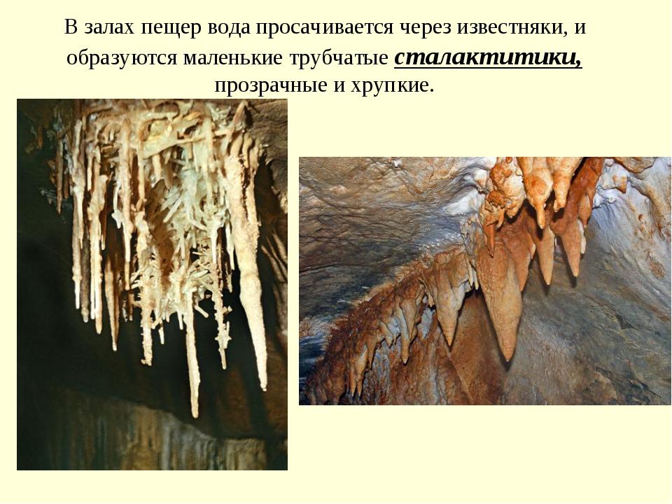 В залах пещер вода просачивается через известняки, и образуются маленькие тру...
