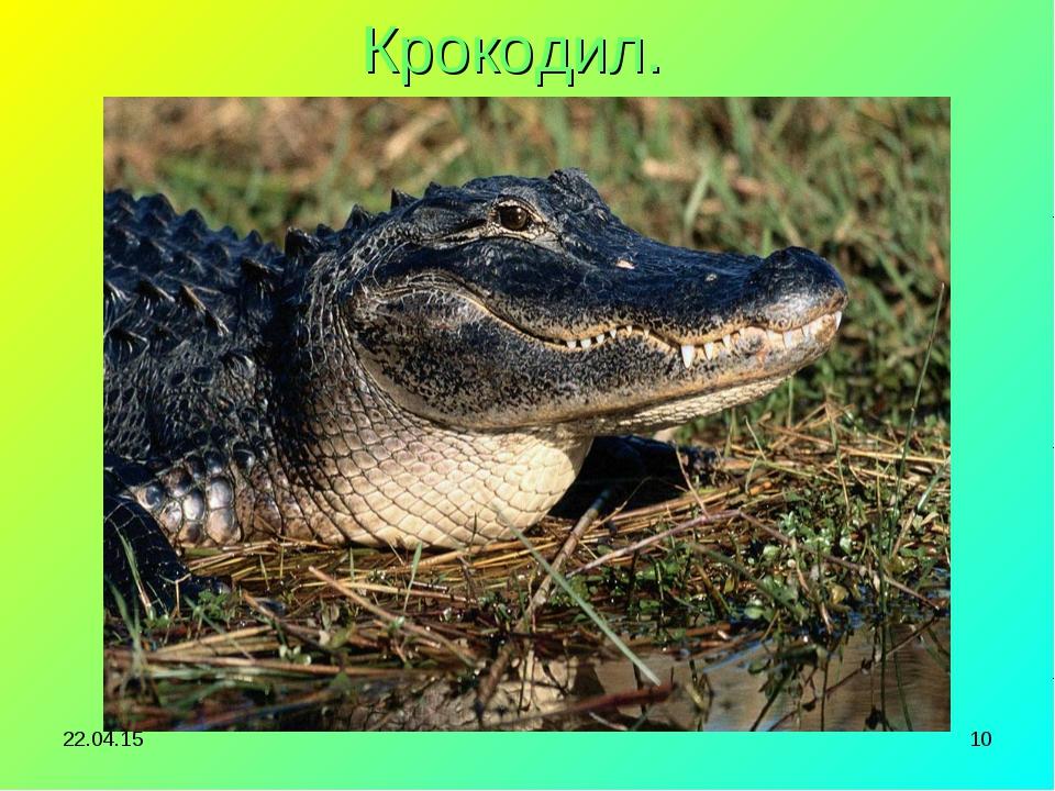 * * Крокодил.