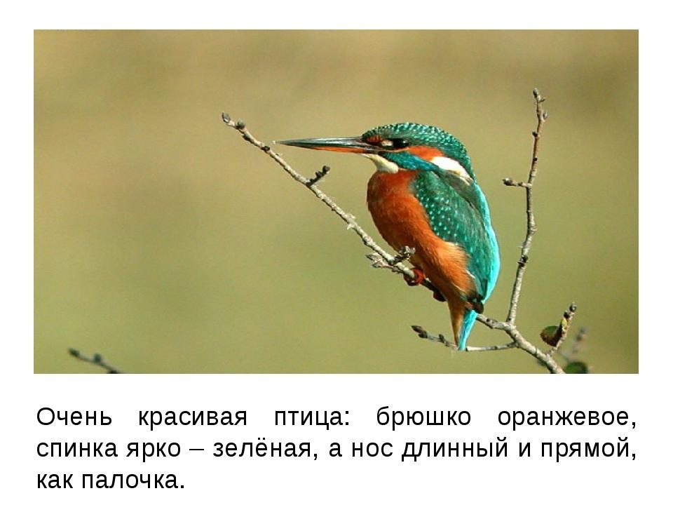 Очень красивая птица: брюшко оранжевое, спинка ярко – зелёная, а нос длинный...