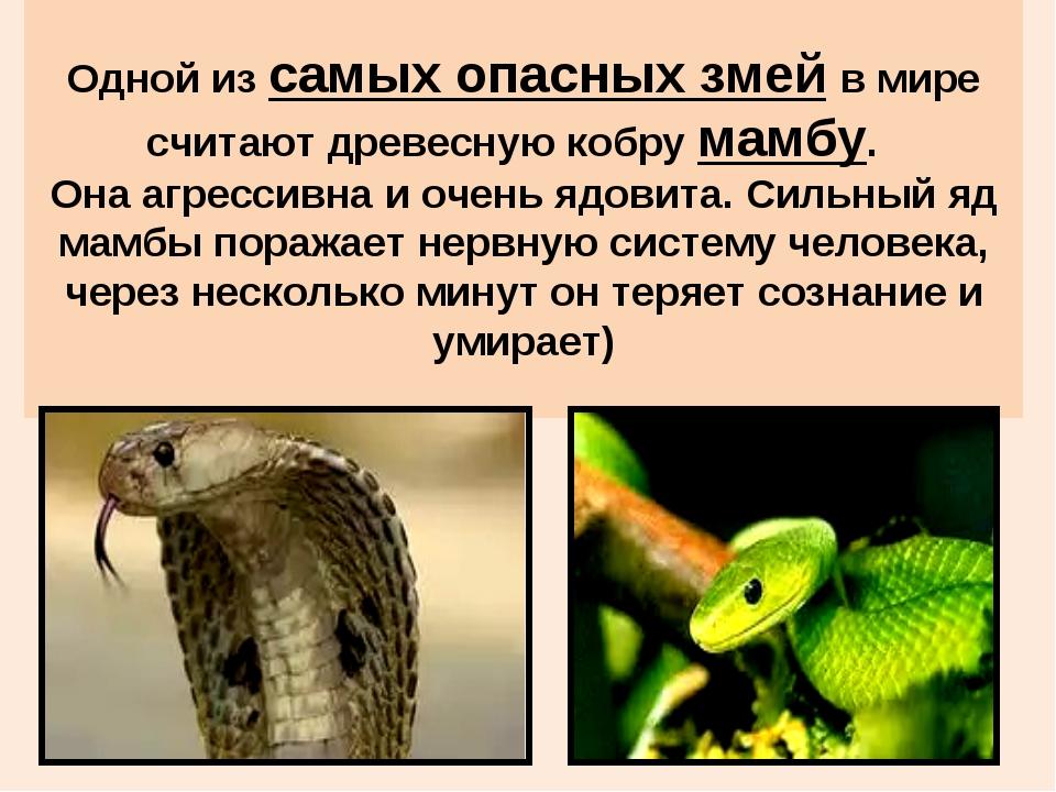 Одной из самых опасных змей в мире считают древесную кобру мамбу. Она агресс...