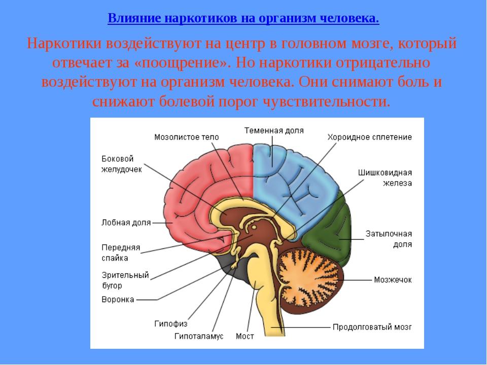Наркотики воздействуют на центр в головном мозге, который отвечает за «поощре...