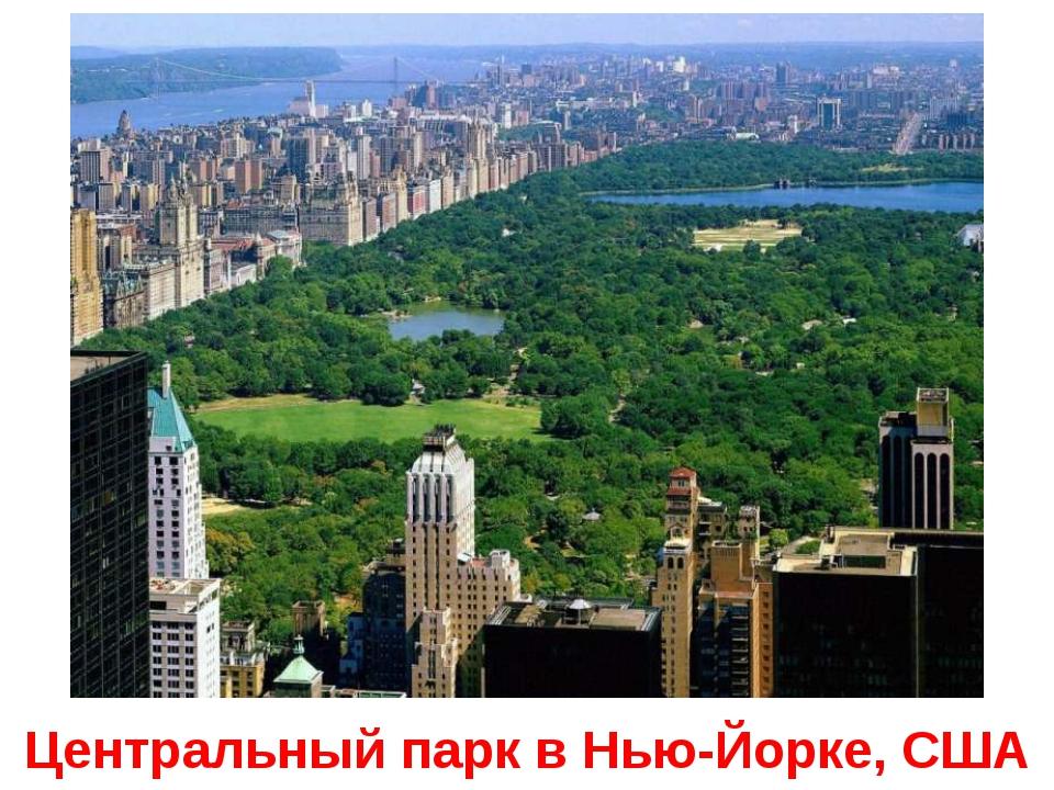 Центральный парк в Нью-Йорке, США