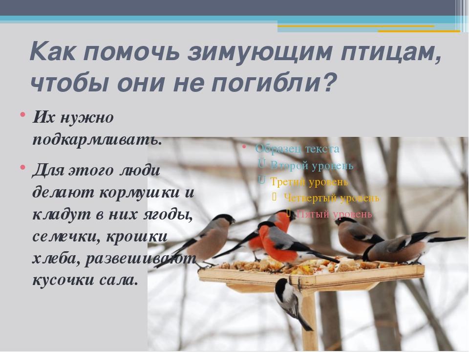 Как помочь зимующим птицам, чтобы они не погибли? Их нужно подкармливать. Для...