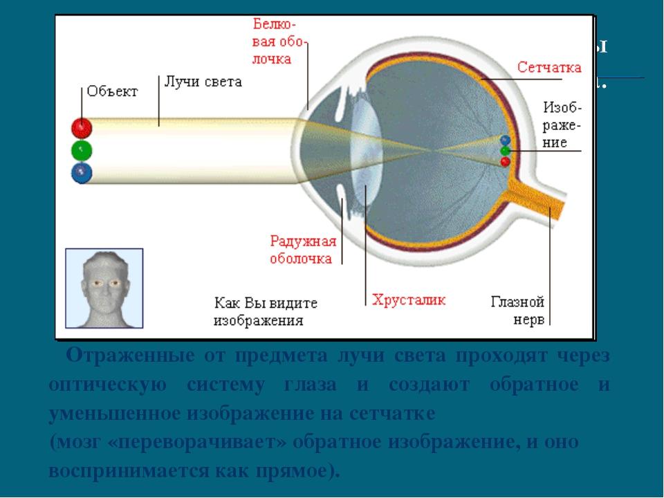 Отраженные от предмета лучи света проходят через оптическую систему глаза и...