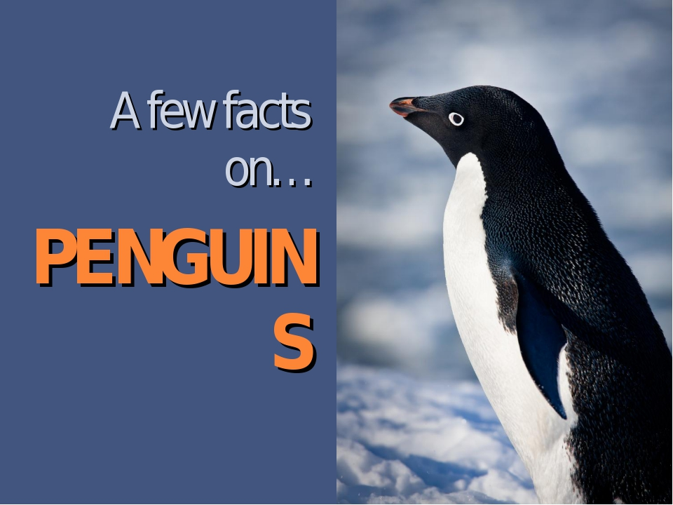A few facts on… PENGUINS