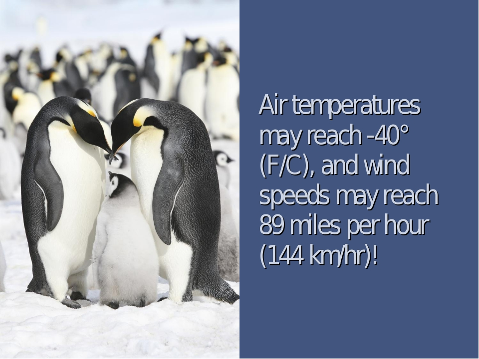 Air temperatures may reach -40° (F/C), and wind speeds may reach 89 miles per...