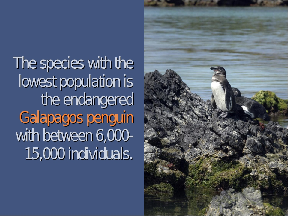 The species with the lowest population is the endangered Galapagos penguin wi...