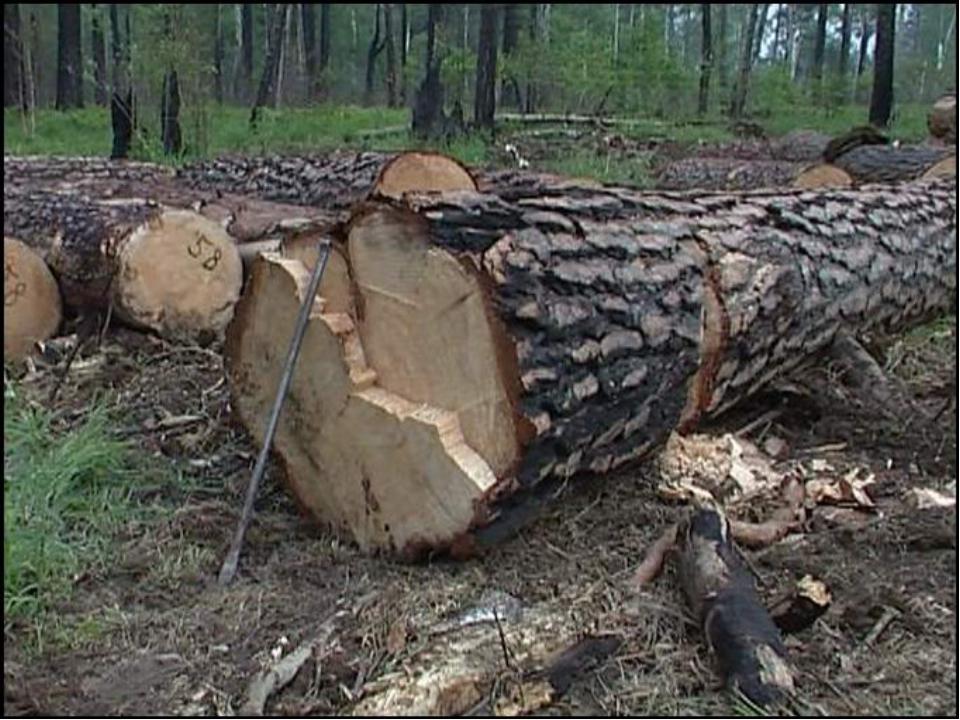 Что такое вырубка лесов?