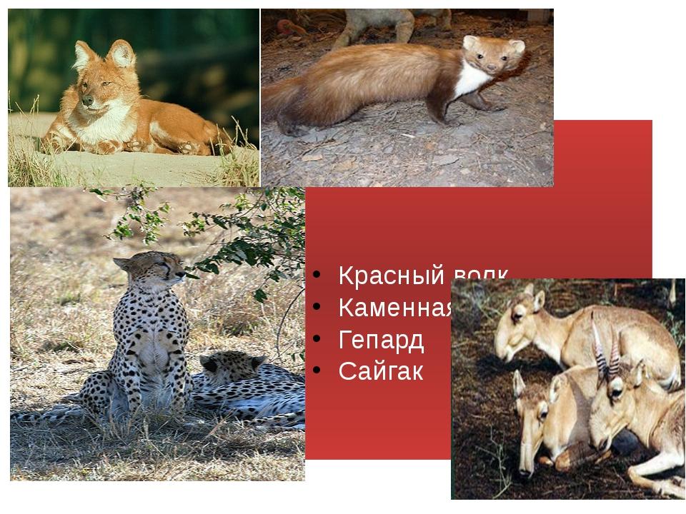 Красный волк Каменная куница Гепард Сайгак