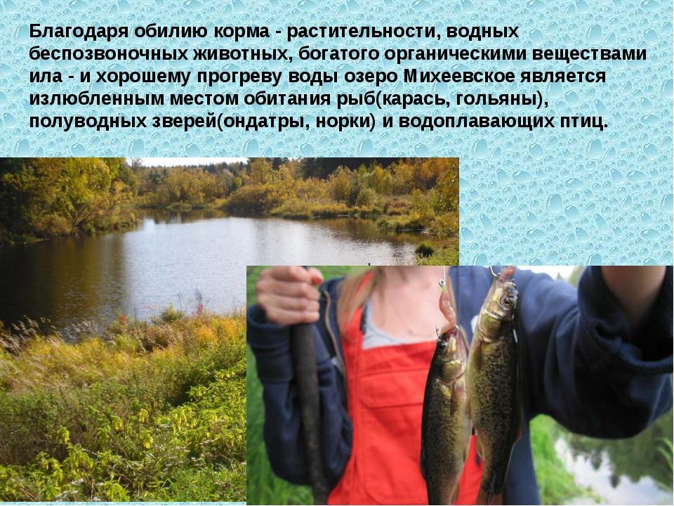 Благодаря обилию корма - растительности, водных беспозвоночных животных, бога...