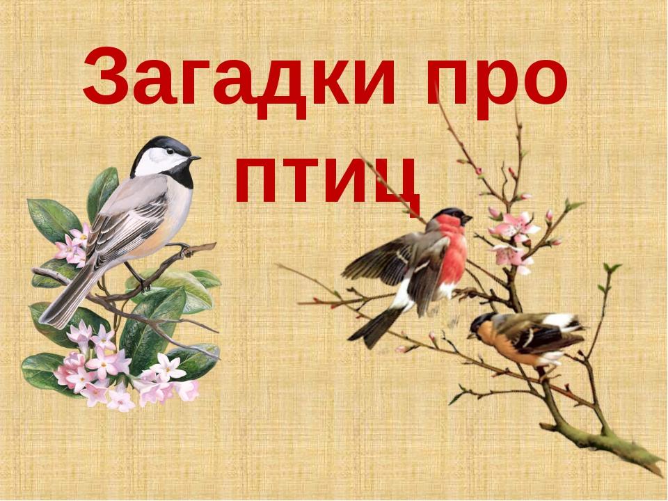 результате загадки о птицах в картинках детям продолжают поиски