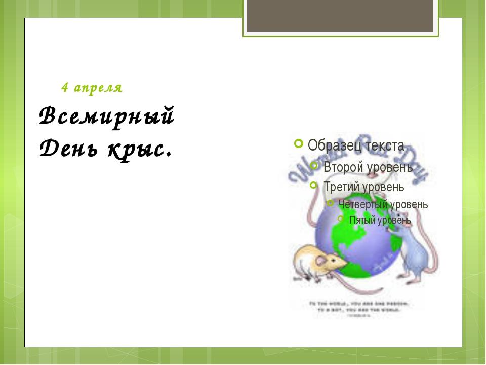 4 апреля Всемирный День крыс.