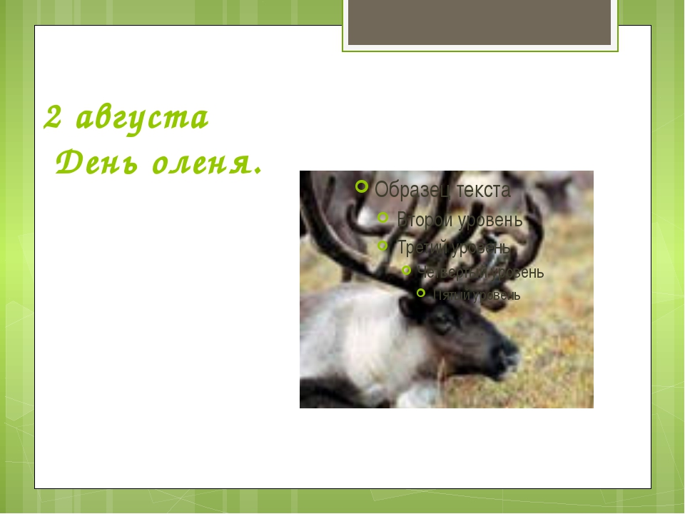 2 августа День оленя.