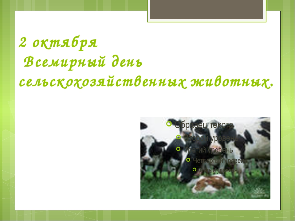 2 октября Всемирный день сельскохозяйственных животных.