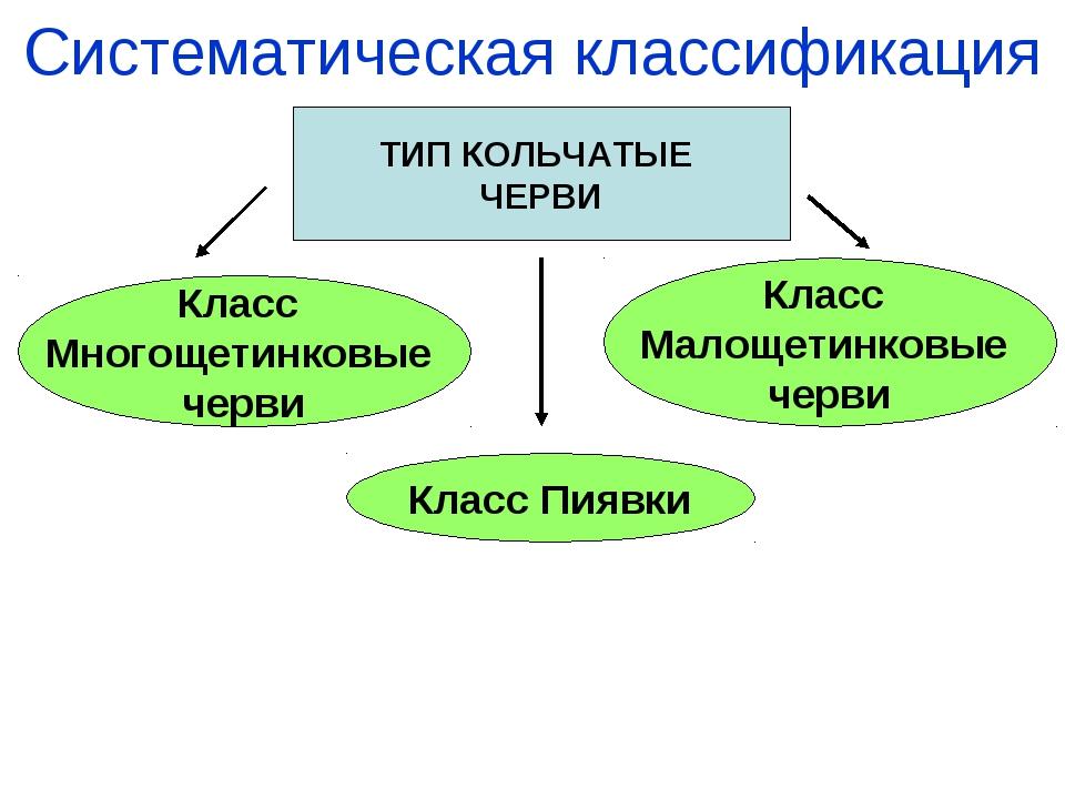Систематическая классификация ТИП КОЛЬЧАТЫЕ ЧЕРВИ Класс Многощетинковые черви...