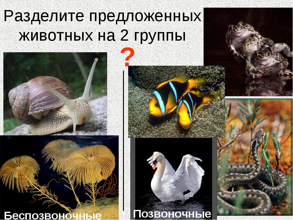 Разделите предложенных животных на 2 группы ? Беспозвоночные Позвоночные