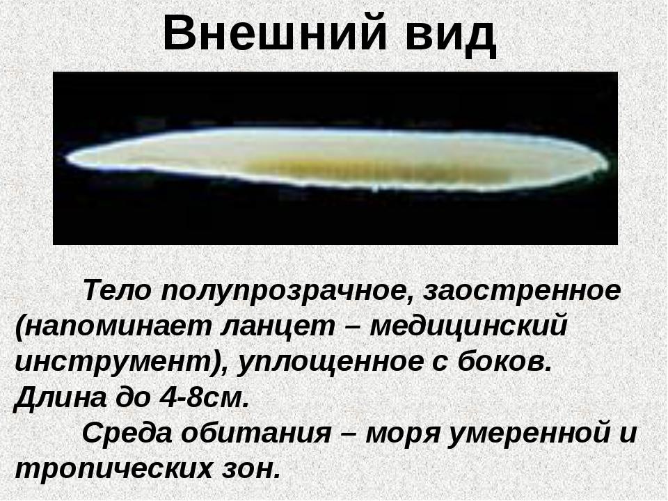 Внешний вид Тело полупрозрачное, заостренное (напоминает ланцет – медицински...