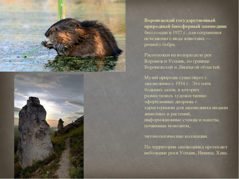 Воронежский государственный природный биосферный заповедник был создан в 1927...