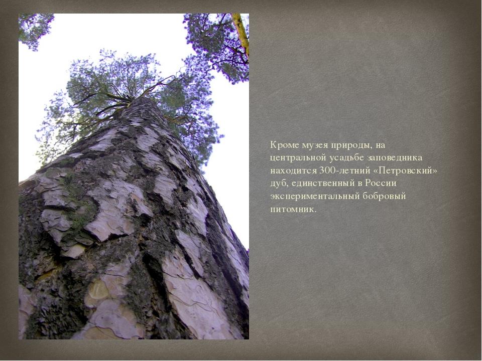Кроме музея природы, на центральной усадьбе заповедника находится 300-летний...