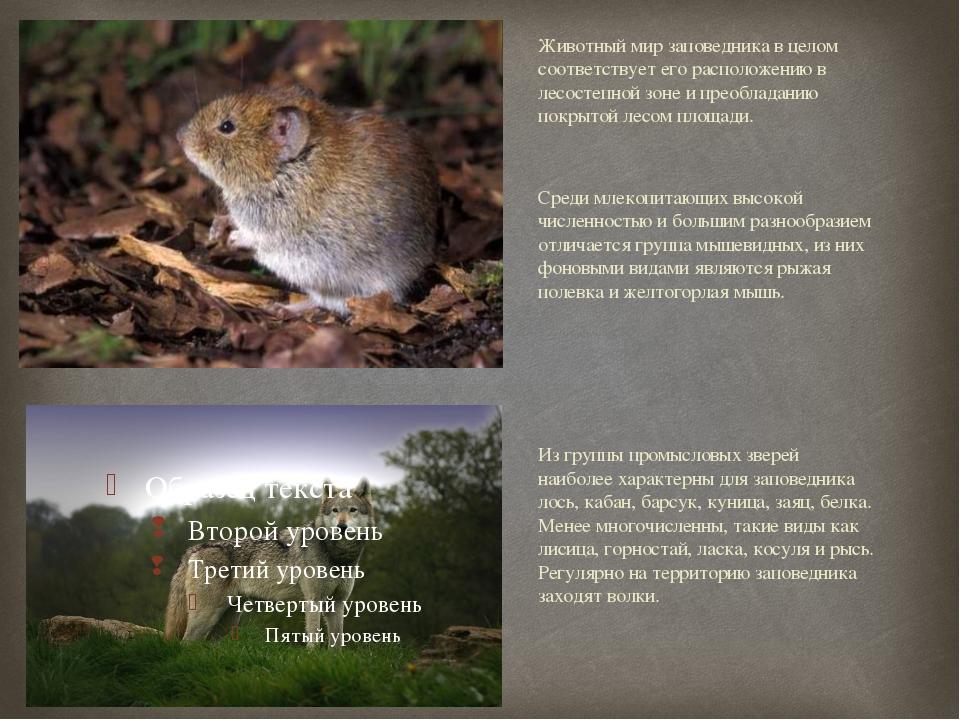 Животный мир заповедника в целом соответствует его расположению в лесостепной...