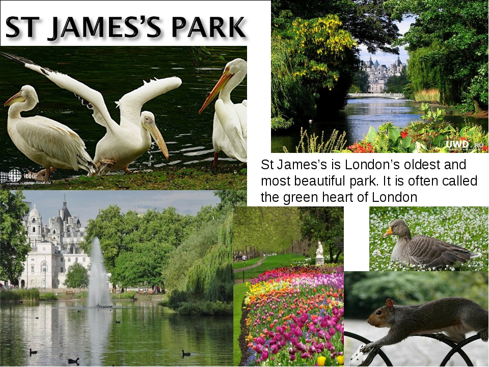 St James's is London's oldest and most beautiful park. It is often called the...