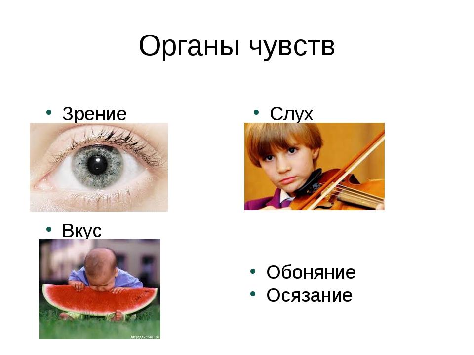 Органы чувств Зрение Слух Обоняние Осязание Вкус