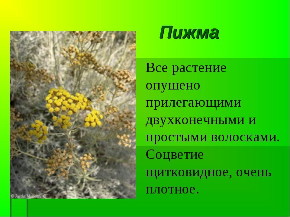 Пижма Все растение опушено прилегающими двухконечными и простыми волосками. С...