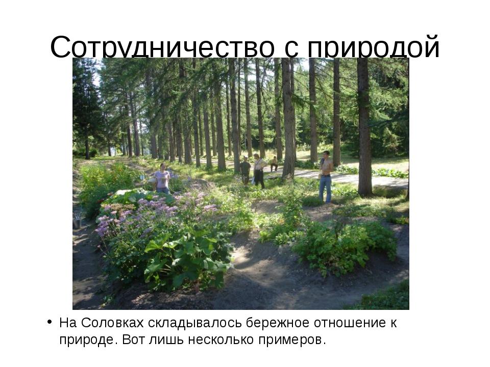 Сотрудничество с природой На Соловках складывалось бережное отношение к приро...