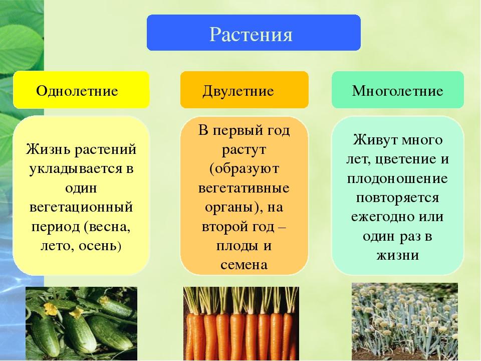 Царство растений Растения Однолетние Двулетние Многолетние Жизнь растений укл...