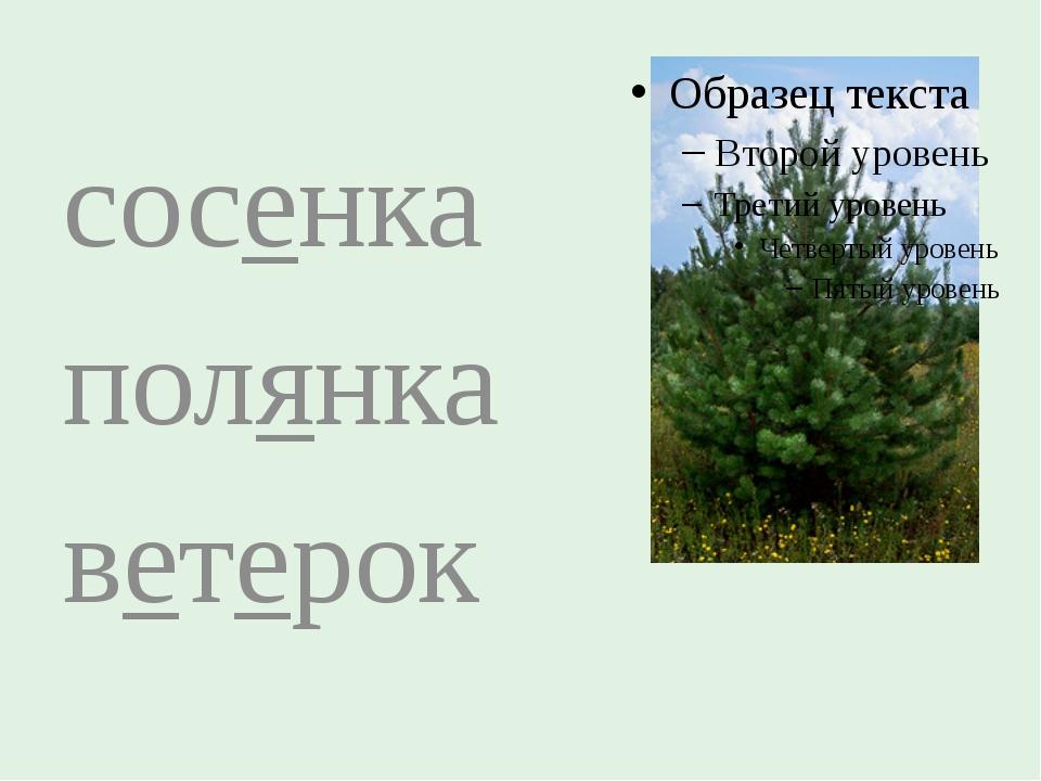 сосенка полянка ветерок