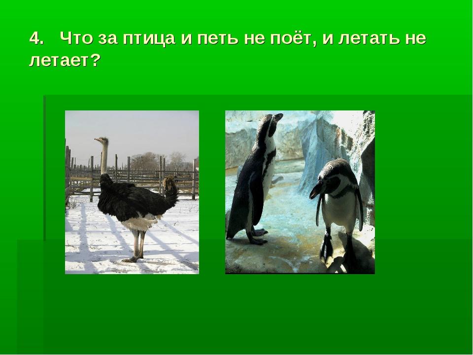 4. Что за птица и петь не поёт, и летать не летает?