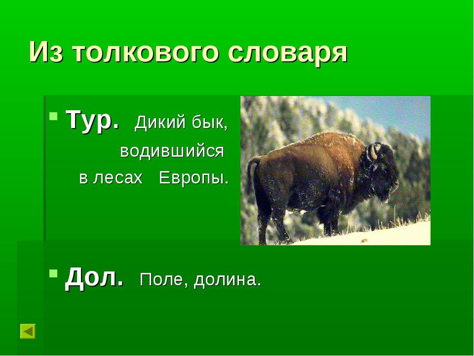 Из толкового словаря Тур. Дикий бык, водившийся в лесах Европы. Дол. Поле, до...