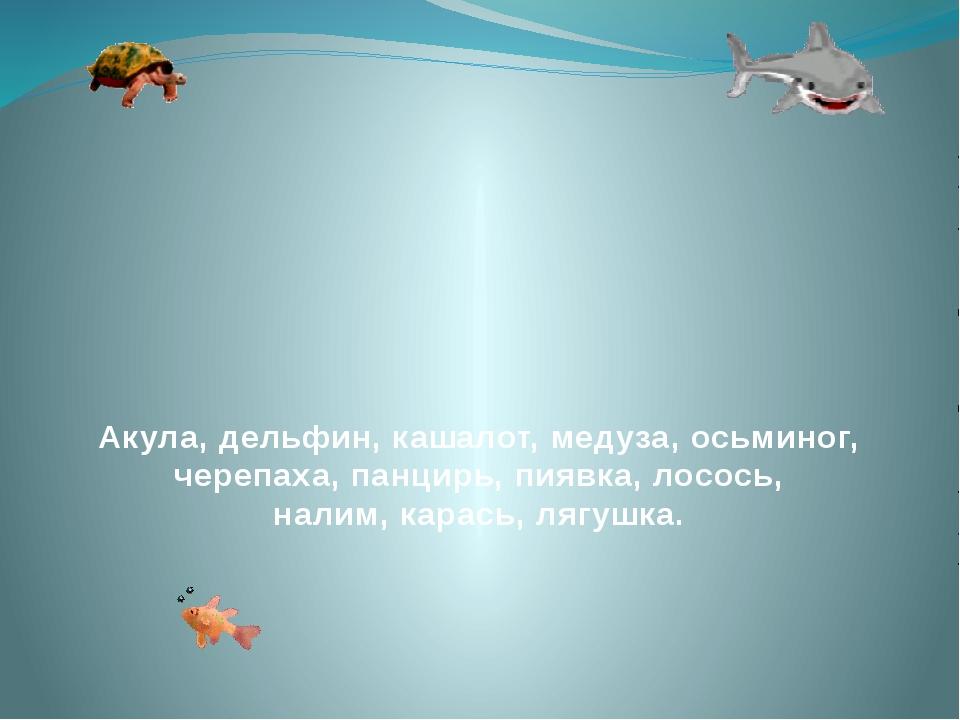 Акула, дельфин, кашалот, медуза, осьминог, черепаха, панцирь, пиявка, лосось...