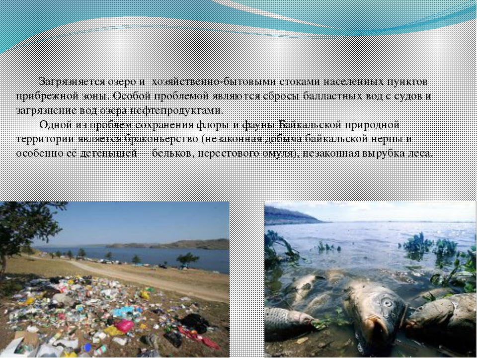 Загрязняется озеро и хозяйственно-бытовыми стоками населенных пунктов прибре...