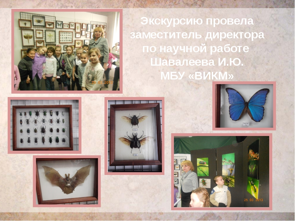 Экскурсию провела заместитель директора по научной работе Шавалеева И.Ю. МБУ...