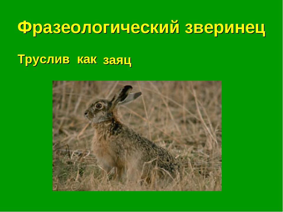 Фразеологический зверинец Труслив как . . . заяц