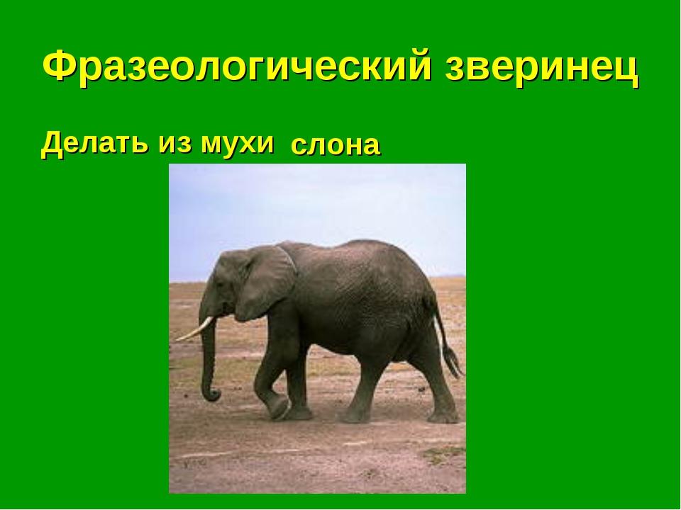 Фразеологический зверинец Делать из мухи . . . слона