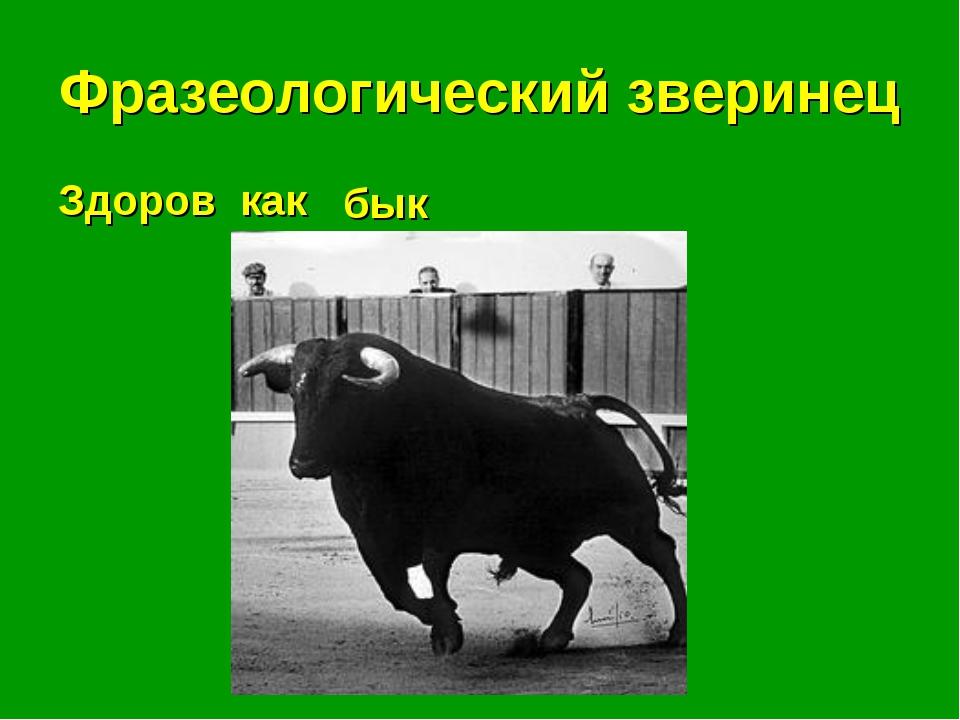 Фразеологический зверинец Здоров как . . . бык