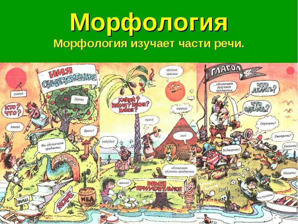 Морфология Морфология изучает части речи.