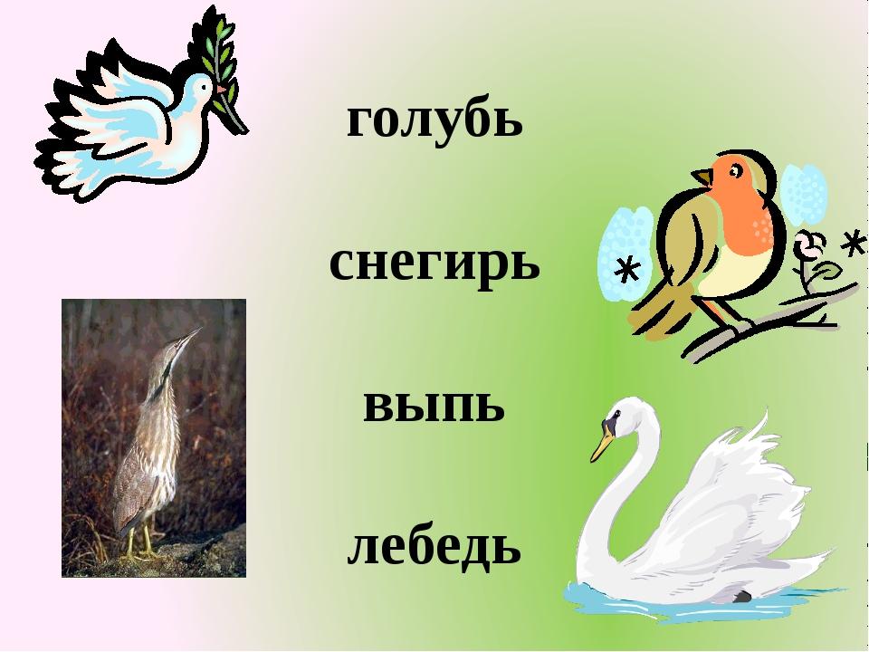 голубь снегирь выпь лебедь