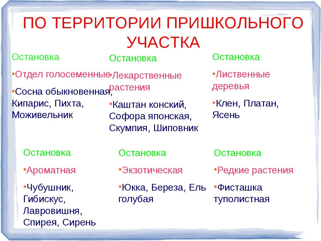 Остановка Остановка Отдел голосеменные Сосна обыкновенная, Кипарис, Пихта,...