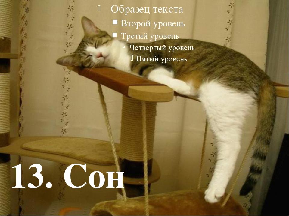 13. Сон