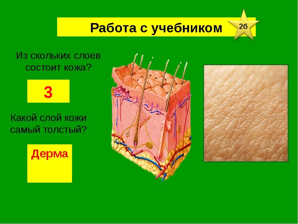 Работа с учебником Из скольких слоев состоит кожа? 3 Какой слой кожи самый то...