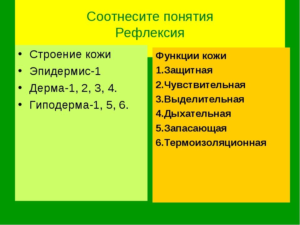 Соотнесите понятия Рефлексия Строение кожи Эпидермис-1 Дерма-1, 2, 3, 4. Гип...