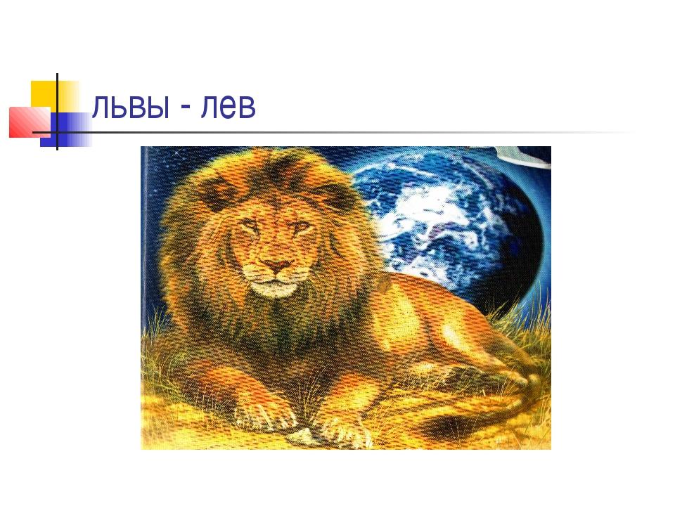 львы - лев